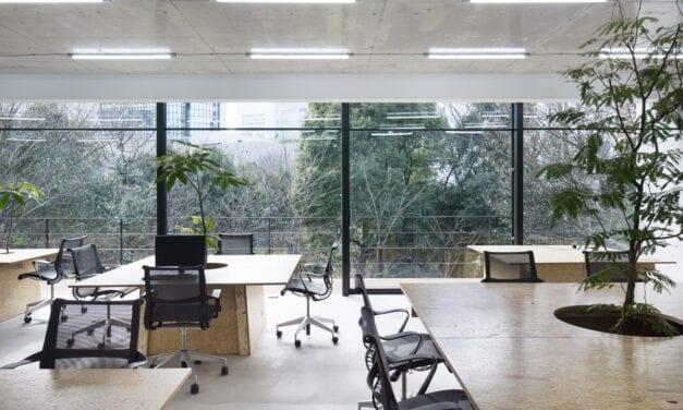 Nakagawa Shoten Omotesando tienda y oficina, de Schemata Architects